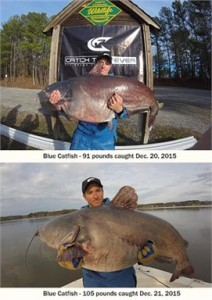 blue-catfish-north-carolina-212x300